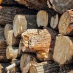 Bomen als brandhout